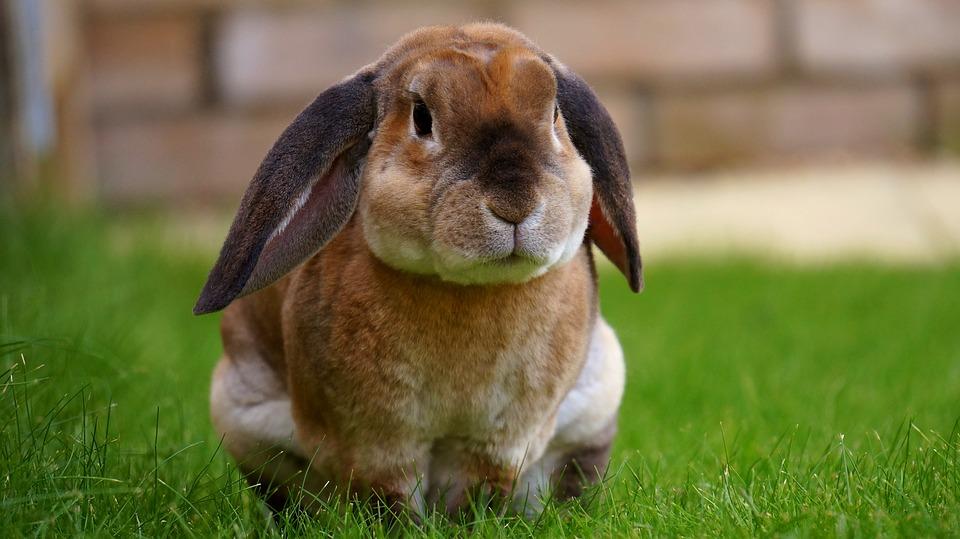 rabbit-1422882_960_720