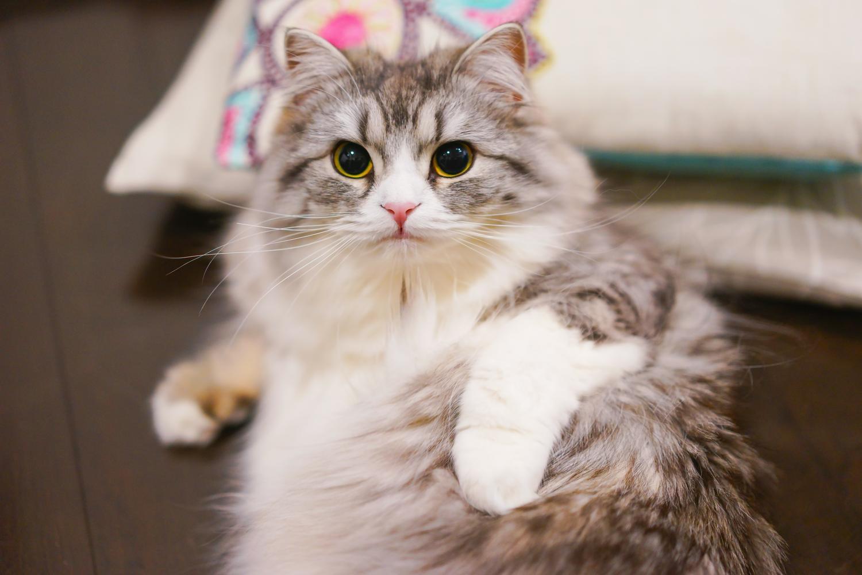 ネコがいつまでも元気でいられる、ネコの役立ち情報です