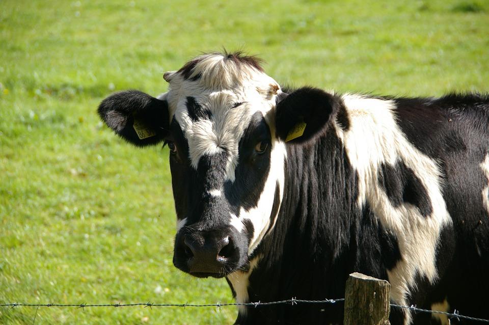 牛乳ってメリットばかりなのでしょうか?デメリットはないの?